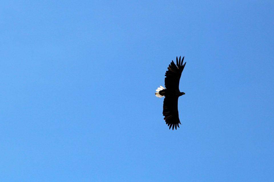 Quels animaux observer dans les îles Lofoten ?