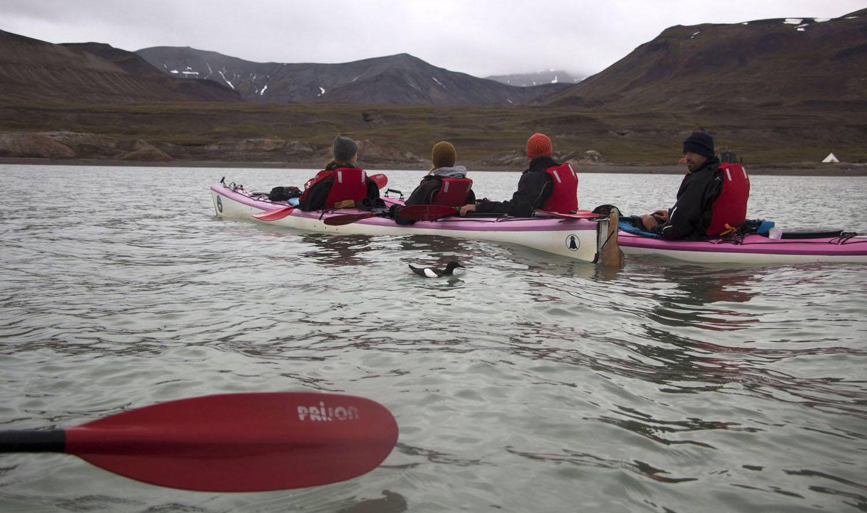 Guillemot à miroir au milieu des kayaks, Svalbard