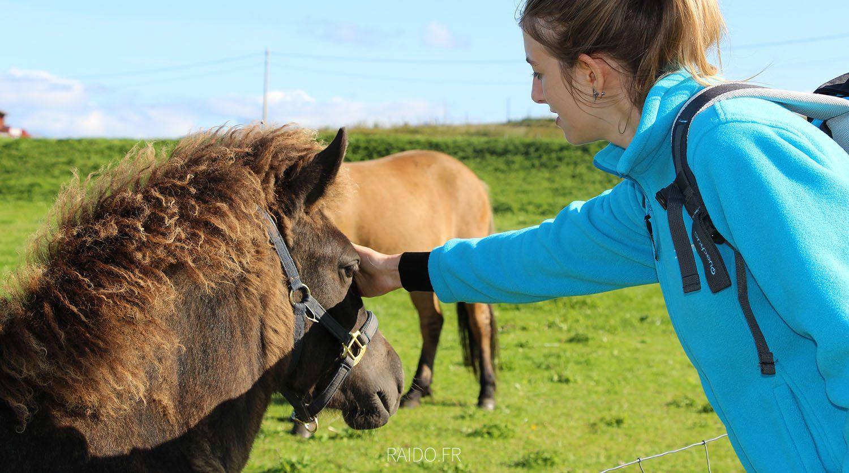 chevaux islandais gimsoya, lofoten